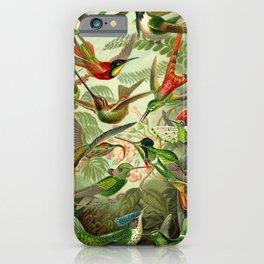 Ernst Haeckel Trochilidae 1904 Poster iPhone Case