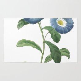 HIGHEST QUALITY botanical poster of Dwarf morning-glory Rug