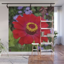 Red zinnia - blazing ring of fire Wall Mural