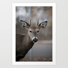 Minnesota North Shore #10 (Deer) Art Print