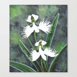 Habenaria radiata white egret orchids flowers Canvas Print