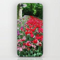 Tulips Path iPhone & iPod Skin