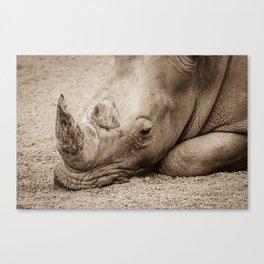 Rhino Sleeping Canvas Print