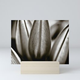 Black And White Lily Buds Mini Art Print