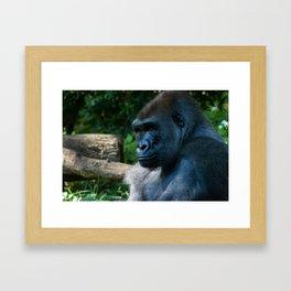 The Bronx Zoo II Framed Art Print
