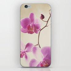 Pink Lady iPhone & iPod Skin