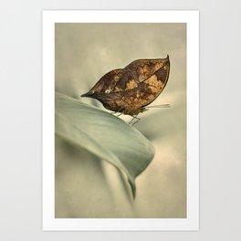 Orange oakleaf butterfly Art Print