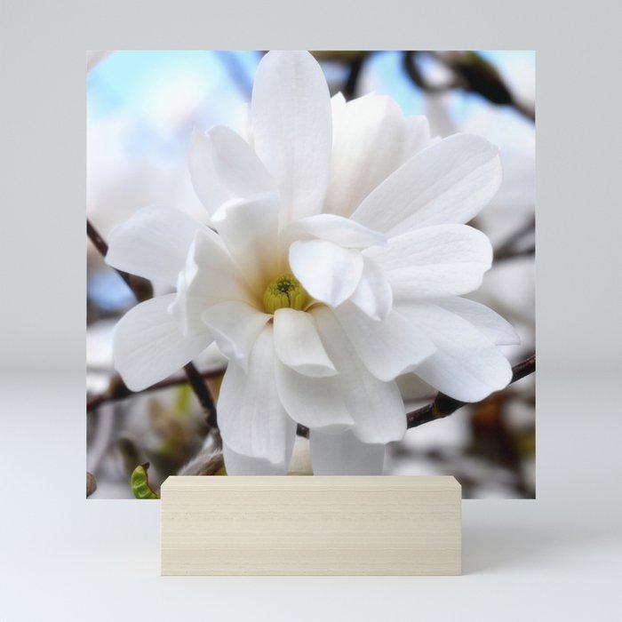 Magnolia 2 Mini Art Print