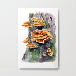 L. sulphureus Metal Print