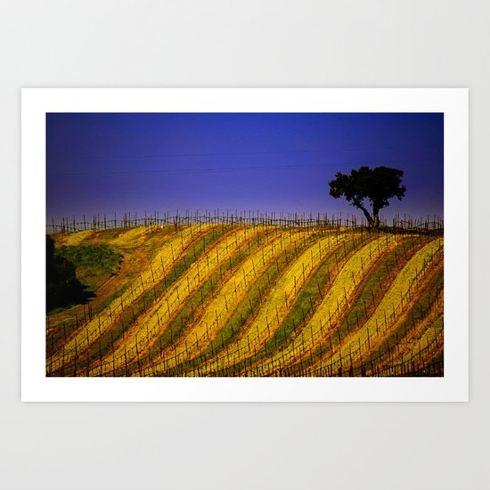 Vineyard in Northern California Art Print