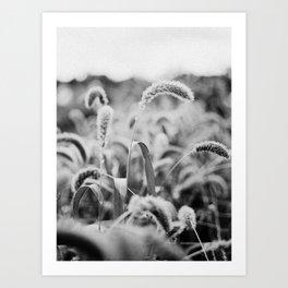 Black & white field Art Print