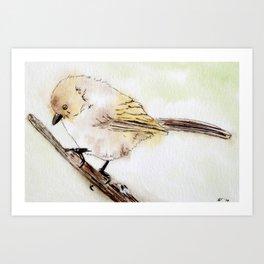Bushtit Bird Art Print