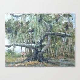 Myakka Spread Canvas Print