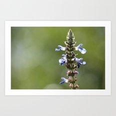 Flower in summer Art Print