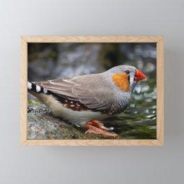 Zebra Finch Bird Animal Framed Mini Art Print