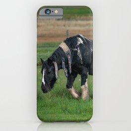 Gypsy Vanner Horse 0188 - Colorado iPhone Case