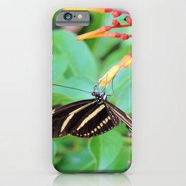 The zebra longwing butterfly iPhone Case