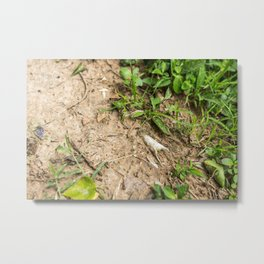 Surfacing, Killing Fields, Cambodia Metal Print