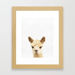 Alpaca, Baby, Animal, ZOO, Nursery, Minimal, Modern, Wall art Art Print Framed Art Print