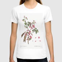 Judas tree (Cercis Siliquastrum) from Traite des Arbres et Arbustes que lon cultive en France en ple T-shirt