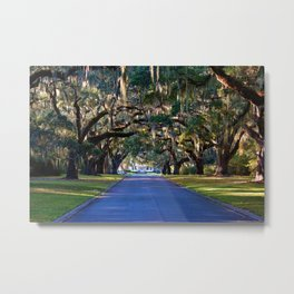 Avenue Of Live Oaks Metal Print