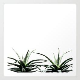 Succulents - Haworthia attenuata - Plant Lover - Botanic Specimens delivering a fresh perspective Art Print