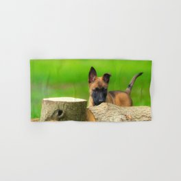 Cute Malinois Dog after the wood Hand & Bath Towel
