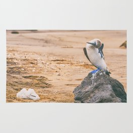 Blue footed booby bird nest with baby Rug