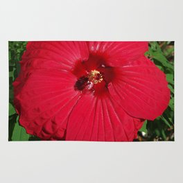 Hibiscus 'Fireball' - regal red star of my late summer garden Rug