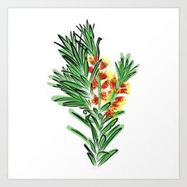 Beautiful Australian Native Bottlebrush Flower Art Print
