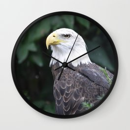 National Aviary - Pittsburgh - Bald Eagle 3 Wall Clock