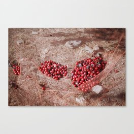 plums in net Canvas Print
