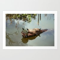 turtles Art Prints featuring Turtles by Black Rose Photography