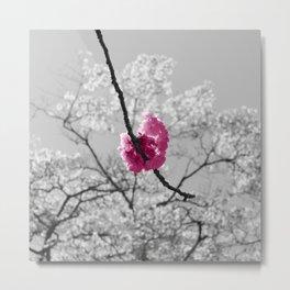 Sakura Blossom Metal Print