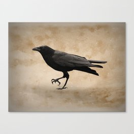 Rustic Crow Black Bird Modern Country Mordern Cottage Art A491 Canvas Print