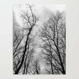 Creepy black and white trees Poster
