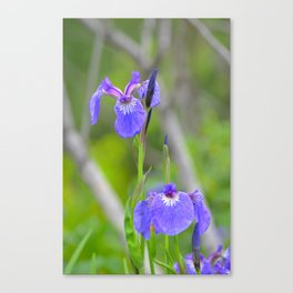 Wild Iris - Alaska Canvas Print