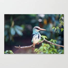Untitled (Bird) Canvas Print