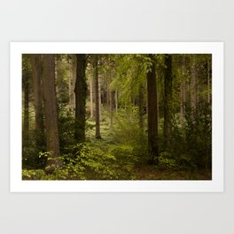 Kentish Woodland Art Print