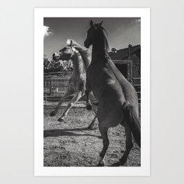 Horse Play Art Print