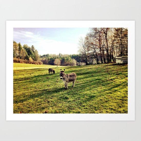 Donkey Days Art Print