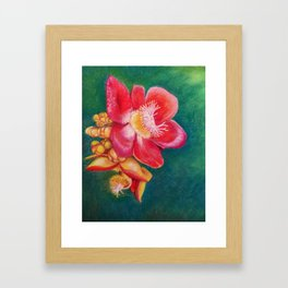 Canonball Flower in soft pastel Framed Art Print