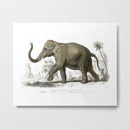 Asiatic elephant Metal Print