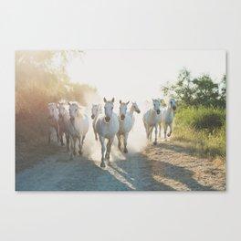 Camargue Horses XIII Canvas Print