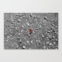 In need of flower Canvas Print