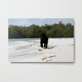Beach Ziggy  Metal Print