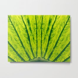 Biomimicry - Biomaterials - Symmetry Metal Print