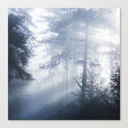 Sun rays shinning through foggy forest Canvas Print