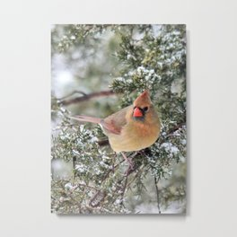 Frosty Female Cardinal Metal Print