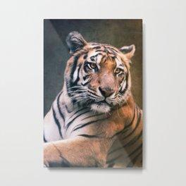 Tiger No 6 Metal Print